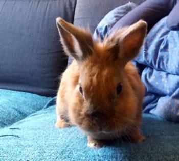 a prova di coniglio