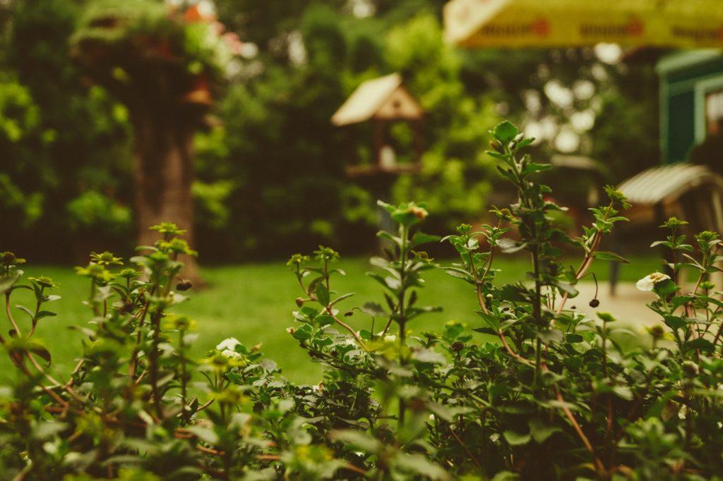 preparazione del giardino
